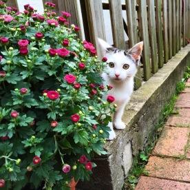 Katze hinterm Busch