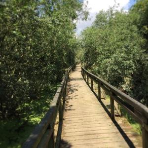 Der Weg im Moor